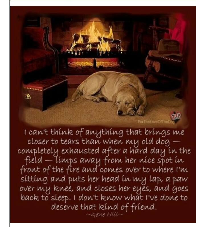 Pin By Terry Boland On Bow Wow Best Dog Quotes Old Dogs Dog Quotes
