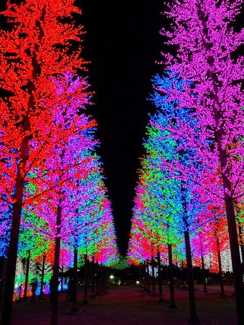 Wow Christmas Lights In Trees