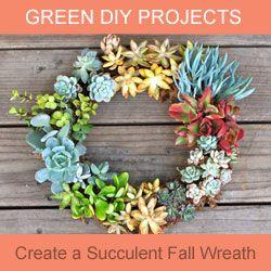 Living Succulent Fall Wreath