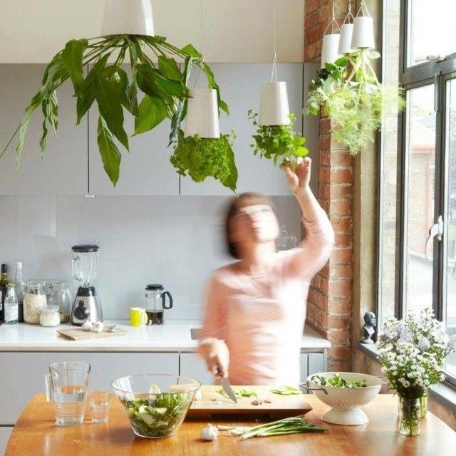 Pflanzen Küche Pflege Tipps hängen passende Blumentöpfe kü - tipps pflege pflanzen wintergarten