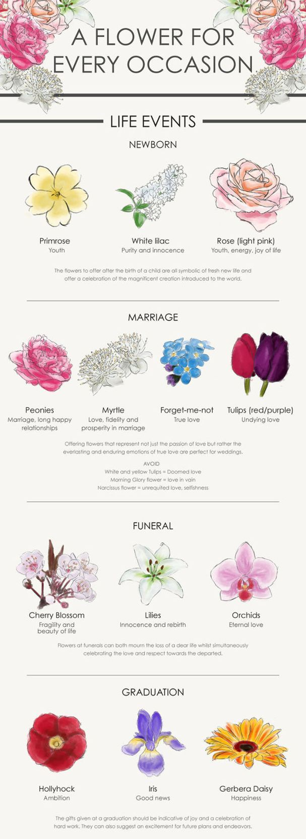 A Flower For Every Occasion Your Complete Guide Flower