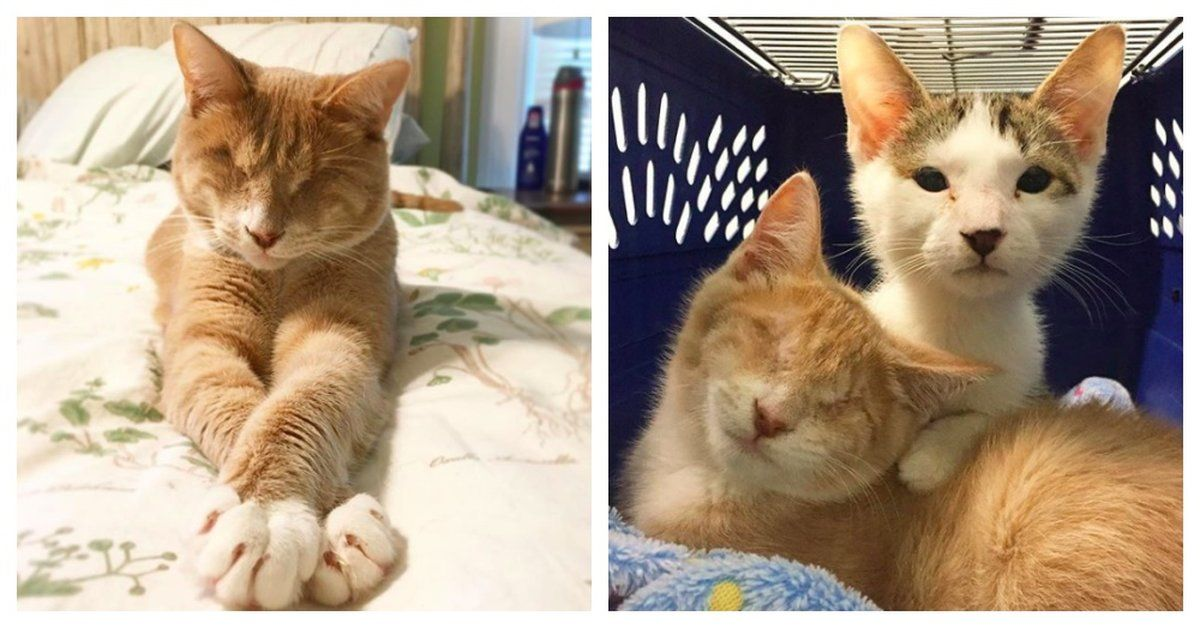 Couple Rescues Blind Kitten From Shelter And Then Returns