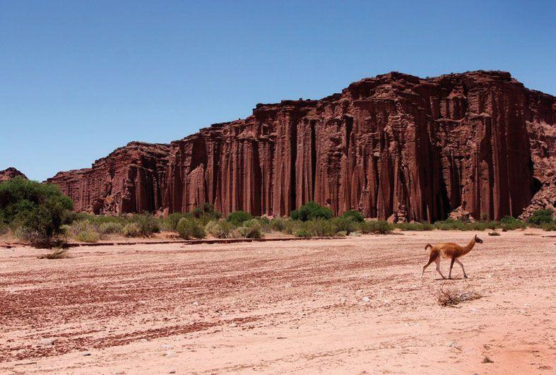 El Parque Nacional Talampaya es uno de esos rincones inolvidables de la geografía argentina. Allá fuimos y te lo contamos en nuestra web. Y te lo mostramos, claro, en una serie de fotos increíbles que te dejan con las ganas de ir ya mismo para allá. Entrá, disfrutalo y enamorate de este lugar: http://054online.com/notas/345/tierra-de-viento-y-buen-vino