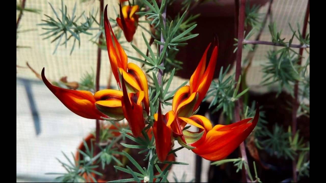 Flores varias cores
