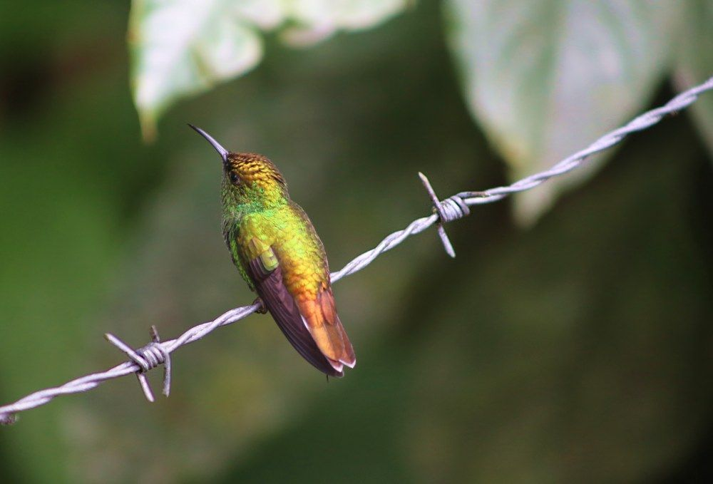 Costa Rica: Magic on the Side of the Road | Not Just Abroad