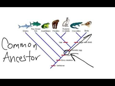 Cladogram Dichotomous Key Biology Lesson Plans Reading Worksheets