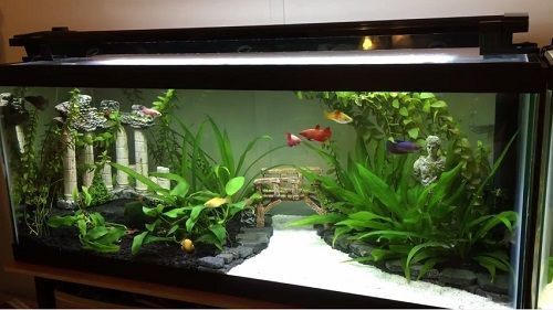 20 Gallon Fish Tank Setup Family Pet Training Fish Tank
