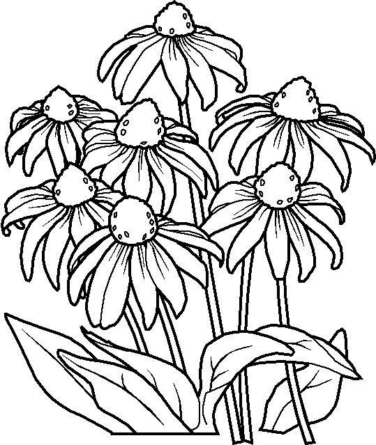kids under 7 flowers coloring pages coloring pages for