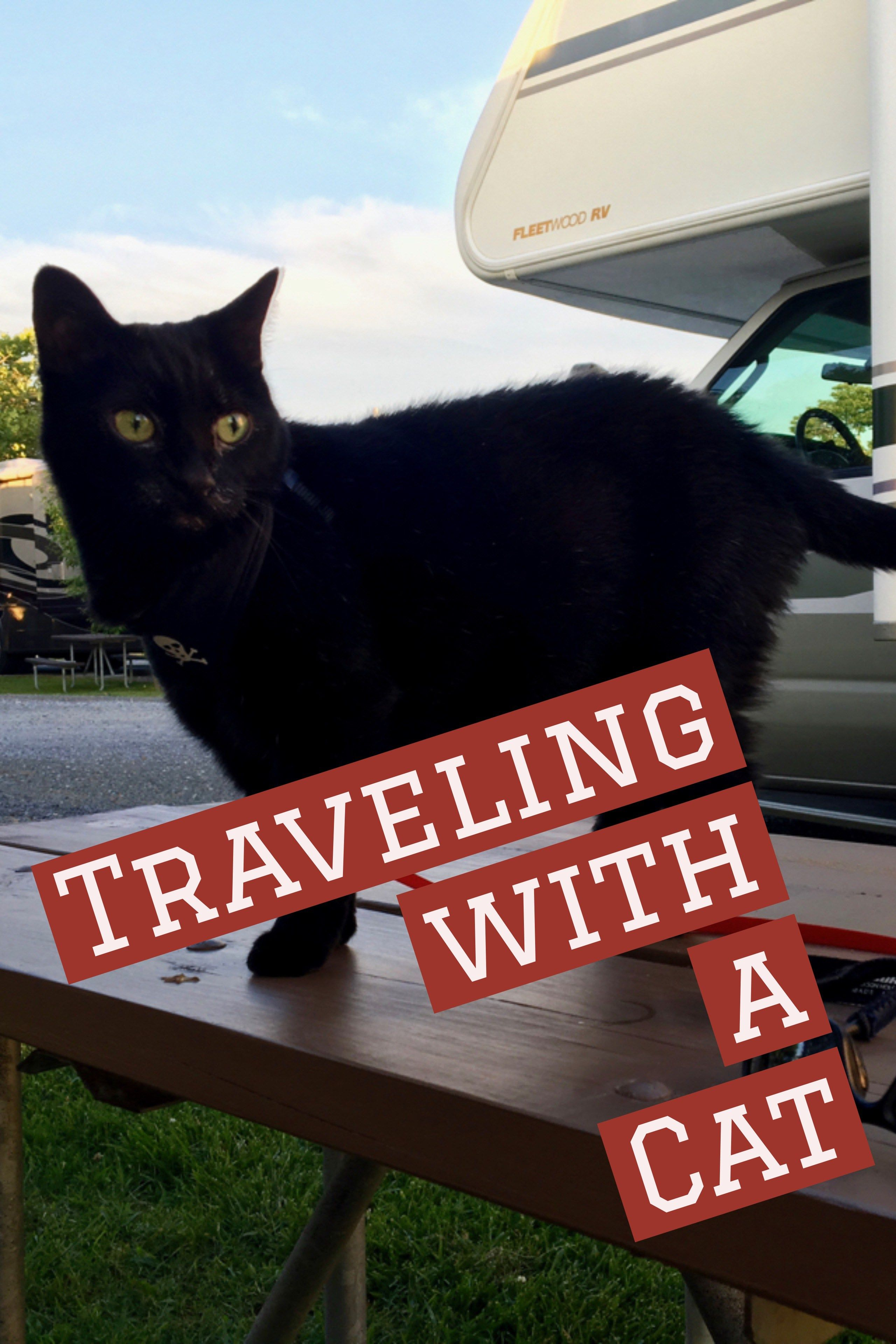 Traveling with a Cat Camping with cats, Rv travel, Pet