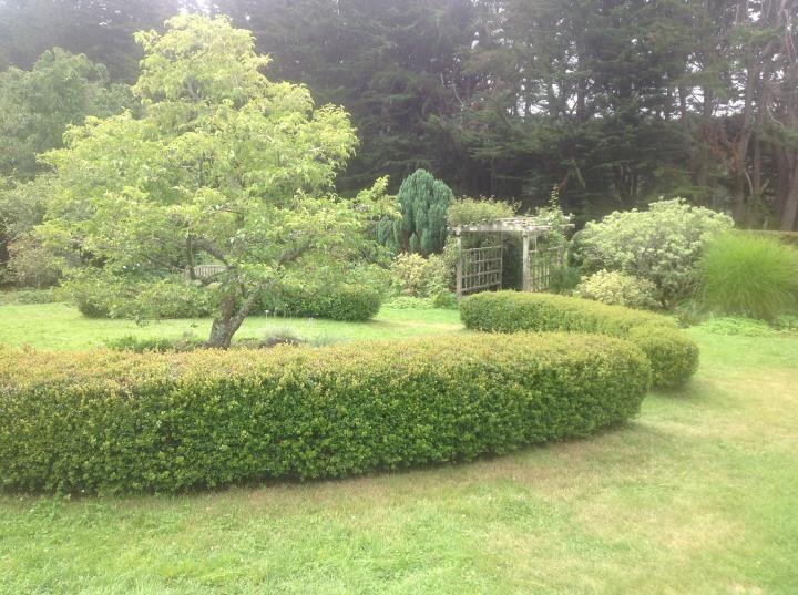Hedges in Marin Image 19 - Marin Landscape installer http://www.mysticallandscapes.com/