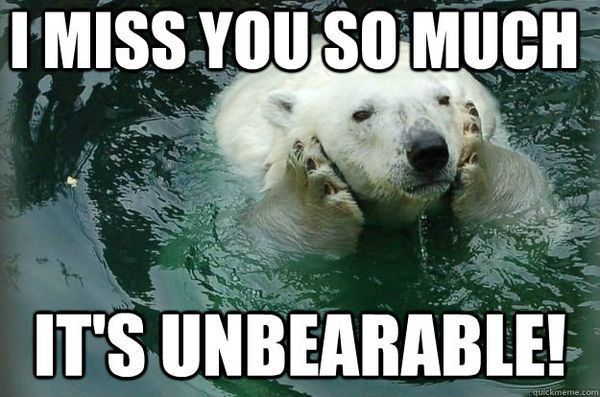 40 Funny Pictures For Today 49 Funnyfoto Cute Miss You Miss You Funny Missing You Memes