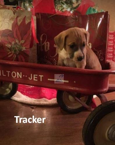 Labbe Dog For Adoption In Asheville Nc Adn 415916 On Puppyfinder
