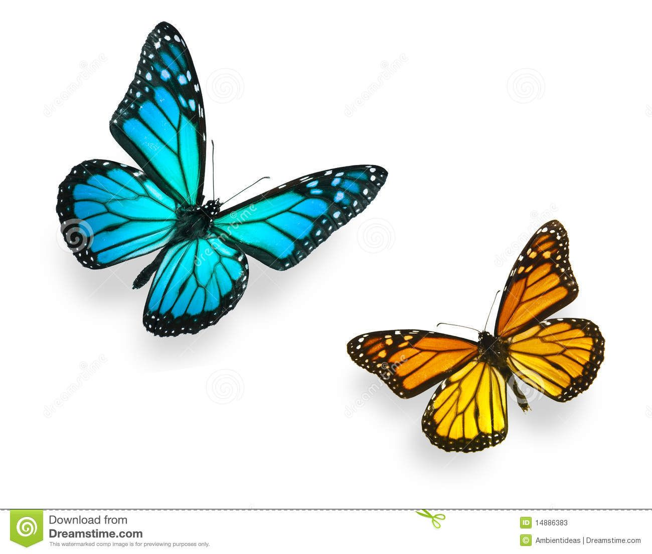Images for blue monarch butterfly drawing