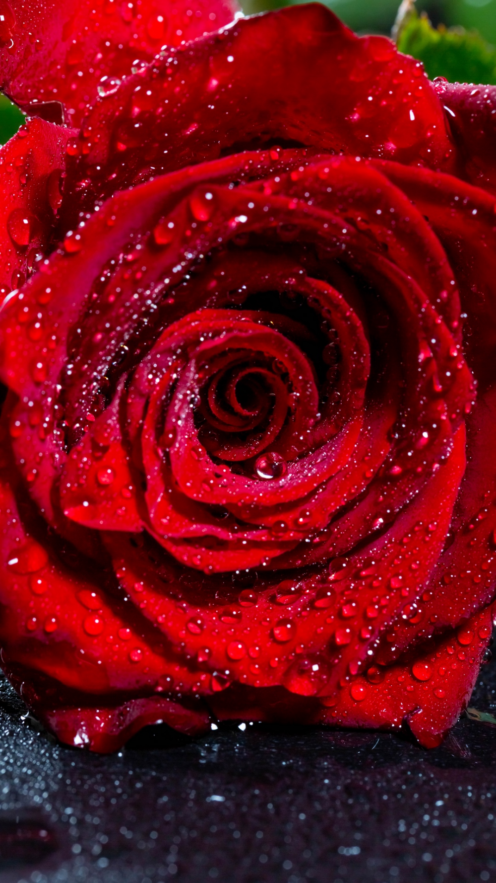 Download Wallpaper 1080x1920 Rose Bud Drops Red Flower Wet Samsung Galaxy S4 S5 Note In 2020 Red Flower Wallpaper Flower Iphone Wallpaper Rose Flower Wallpaper