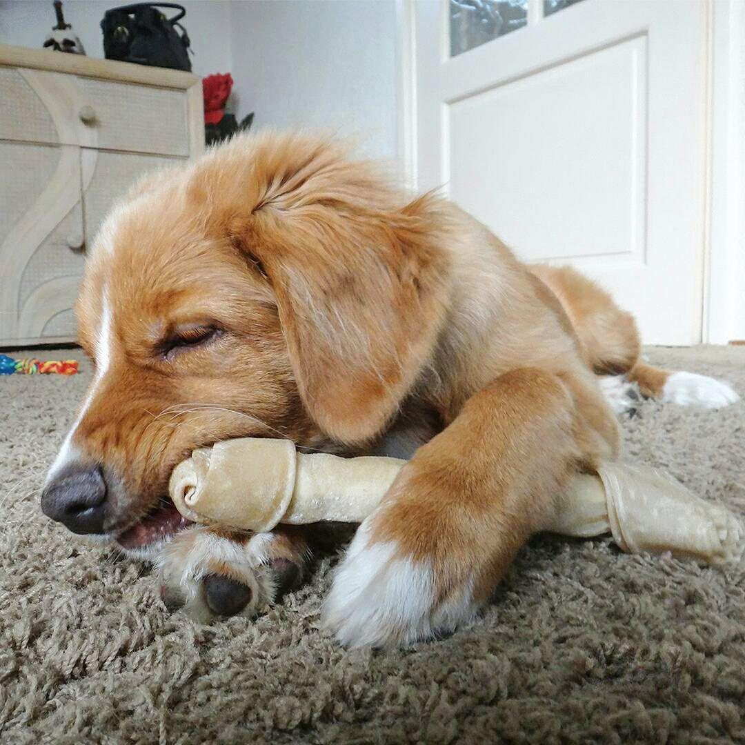 Puppy Eating A Bone Loki Loved