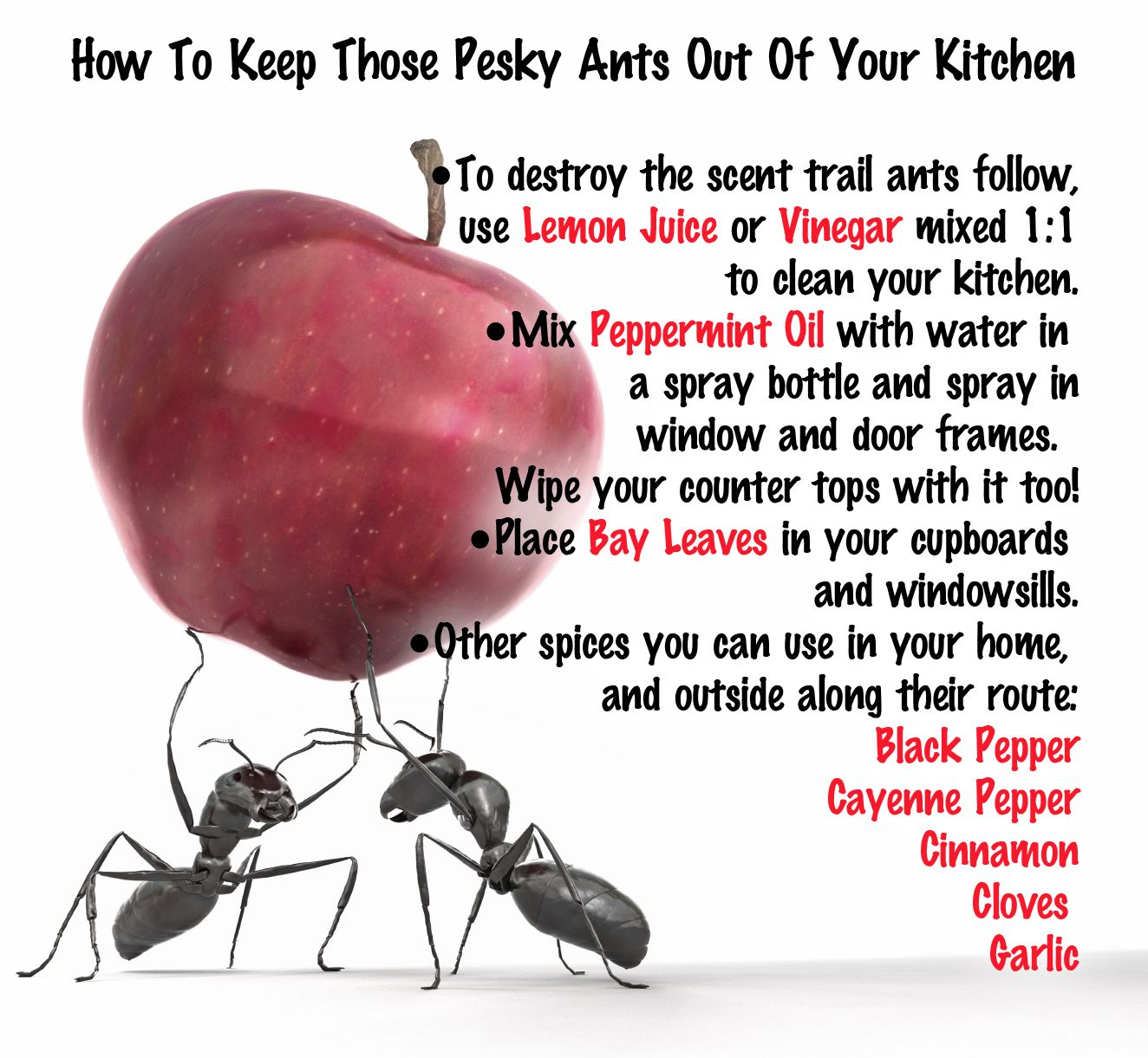 How to keep those pesky ants out of your kitchen