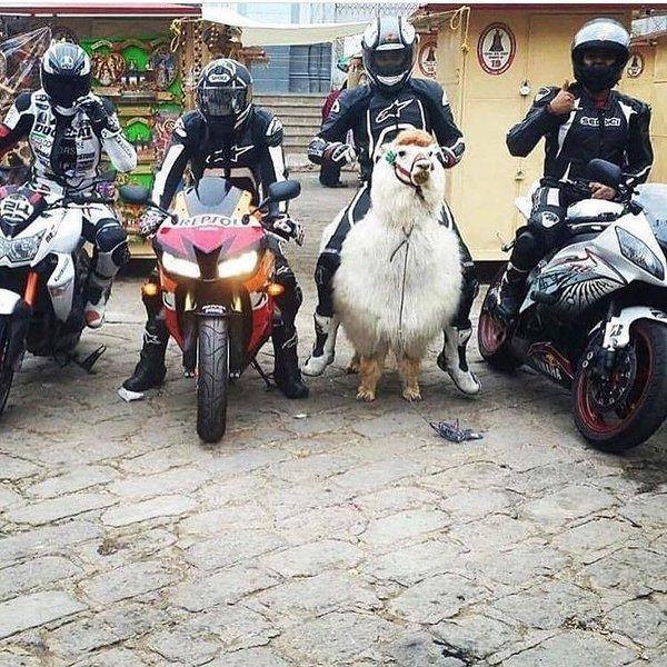 Смешные картинки про мотоцикл хонда