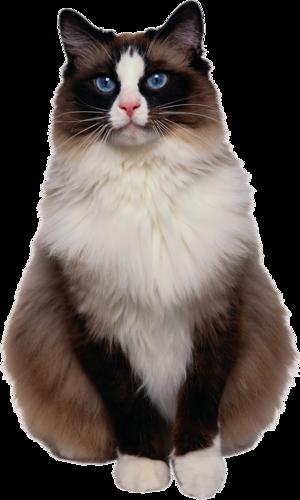 Cats Красивые кошки, Кошки и котята, Милые котики