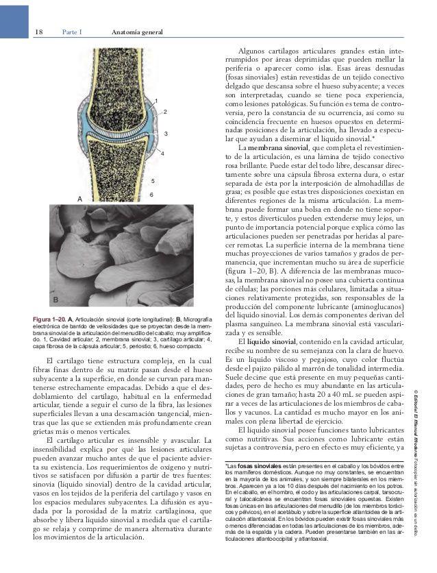 Bonito Libro De Colorear De Anatomía Veterinaria Viñeta - Páginas ...