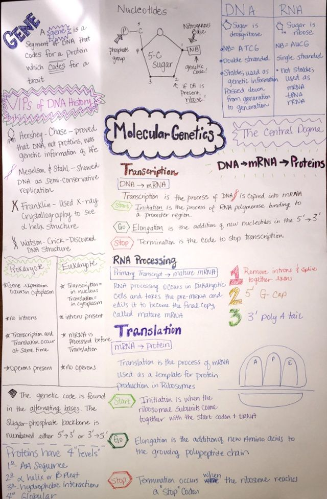 Notes Molecular Biology Part 1 With Images Biology College