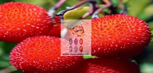 فوائد واستخدامات فاكهة اللنج Fruit Benefits Fruit Strawberry