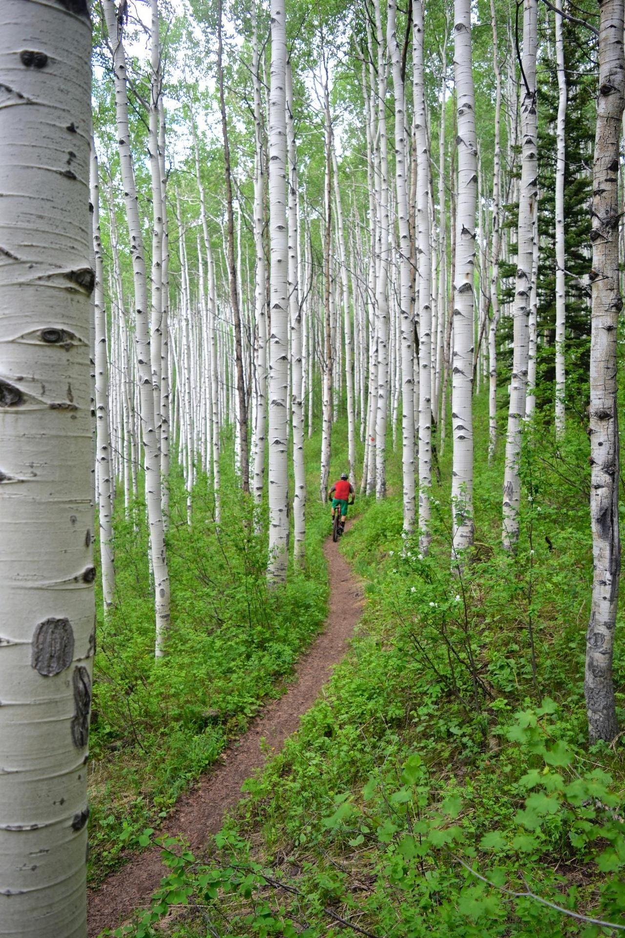 Aspen Glade Trail Beaver Creek Mountain Colorado Photo Erik