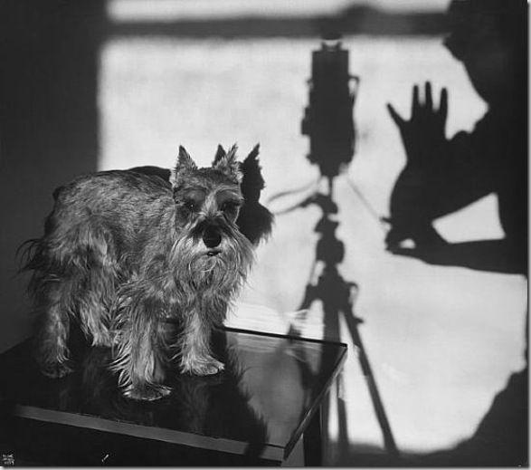 Ilse Bing #dog #photography #blackandwhite