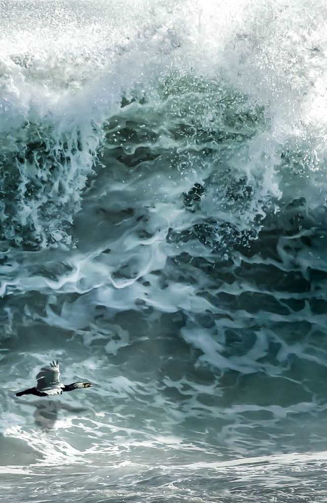 ~~The Bird and the Sea | this is not a small bird, but a huge wave, near the Cape of Good Hope, Atlantic Coast, South Africa by Andreas Feldtkeller~~
