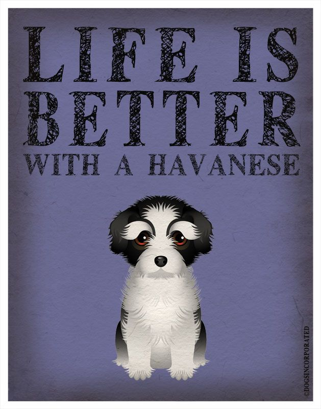 Life is Better with a Havanese Art Print