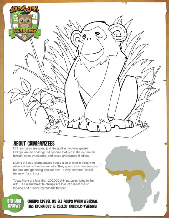 Chimpanzee Educational Coloring Page Animaljam Stuff