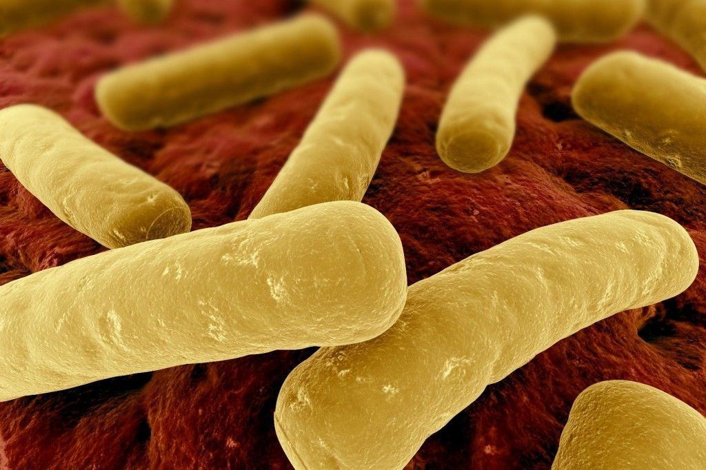C Diff Diet Basics: Gain Control Over the Gut Bacteria ...