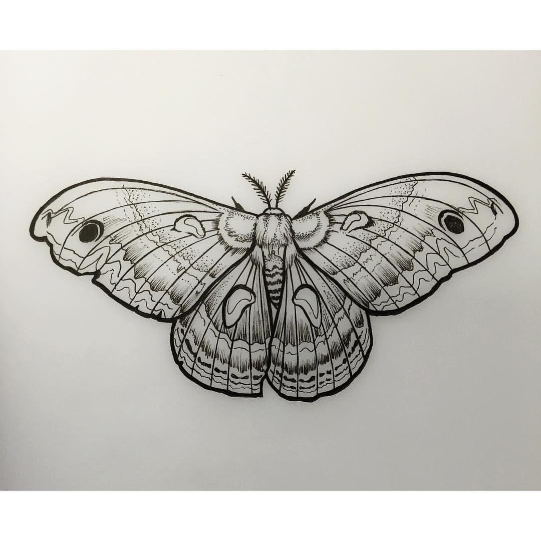 74ad63b61 #moth #linedrawing #davidmushaney #rebelmuse #linework #mothdrawing