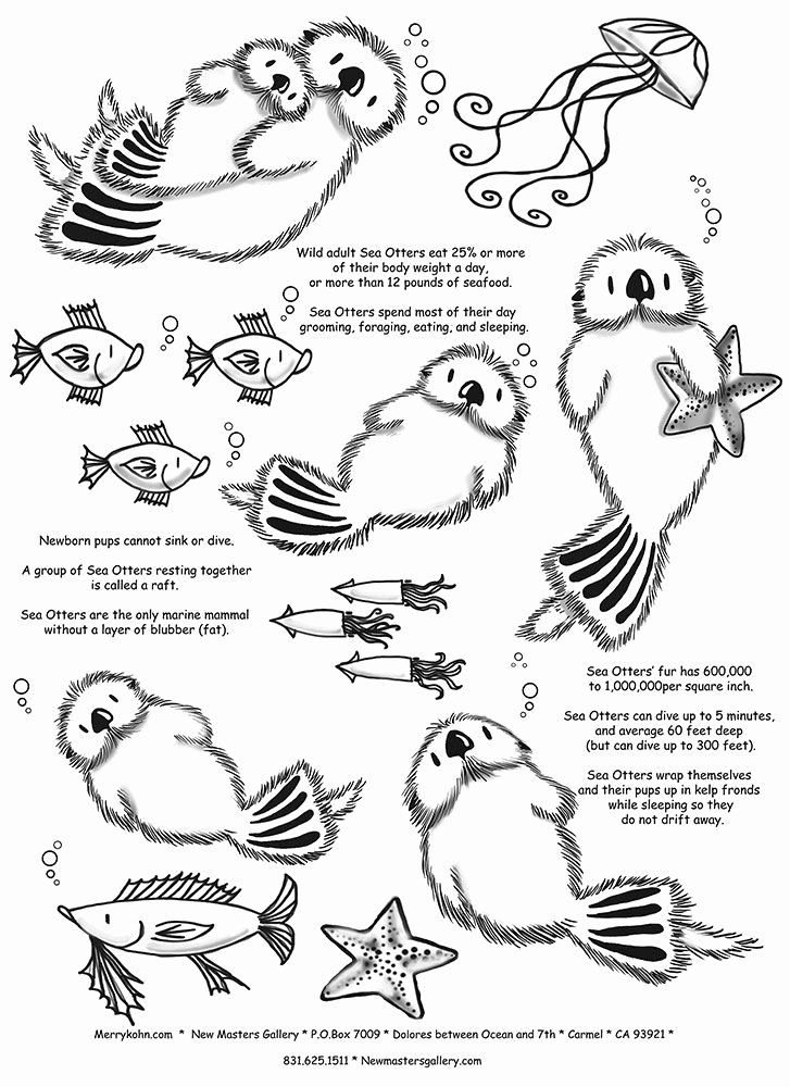 sea otter coloring page inspirational otter fun facts