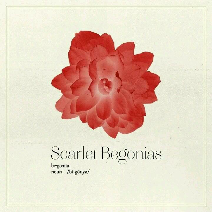 Scarlet Begonias Begonia Xmas Gifts For Her Stargazer Lily
