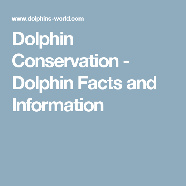 Stinapa Gives Information About Protected Marine Species: Dolphin Facts And Information