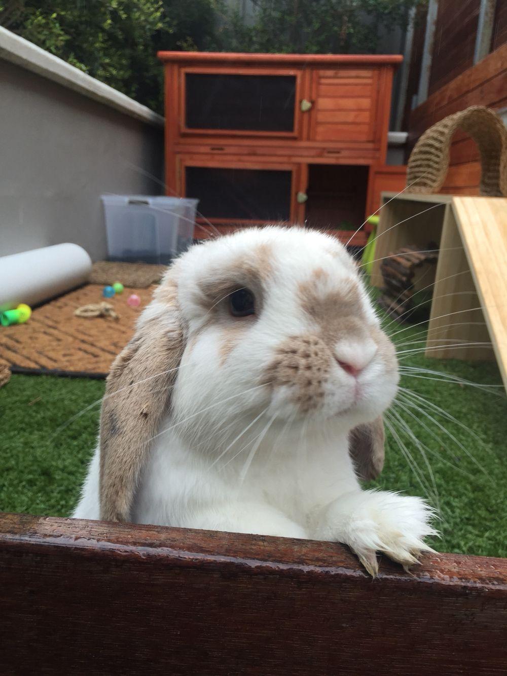 Outdoor Bunny Hutch Plans