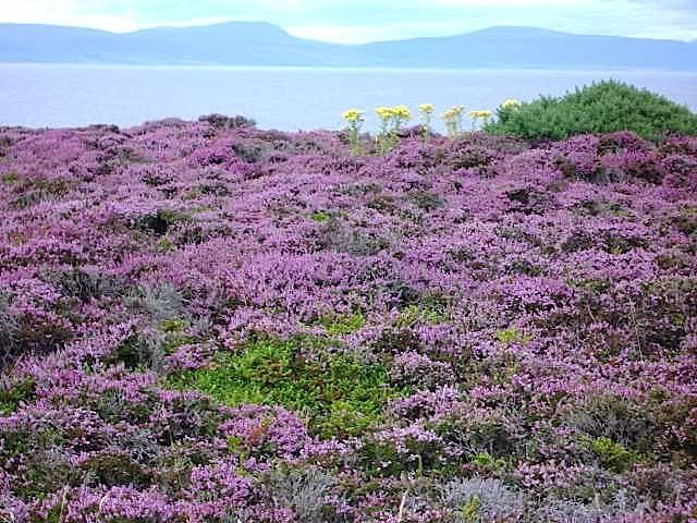 Walk Through Fields Of Heather To The Loch Scotland Highlands Scotland Scottish Heather