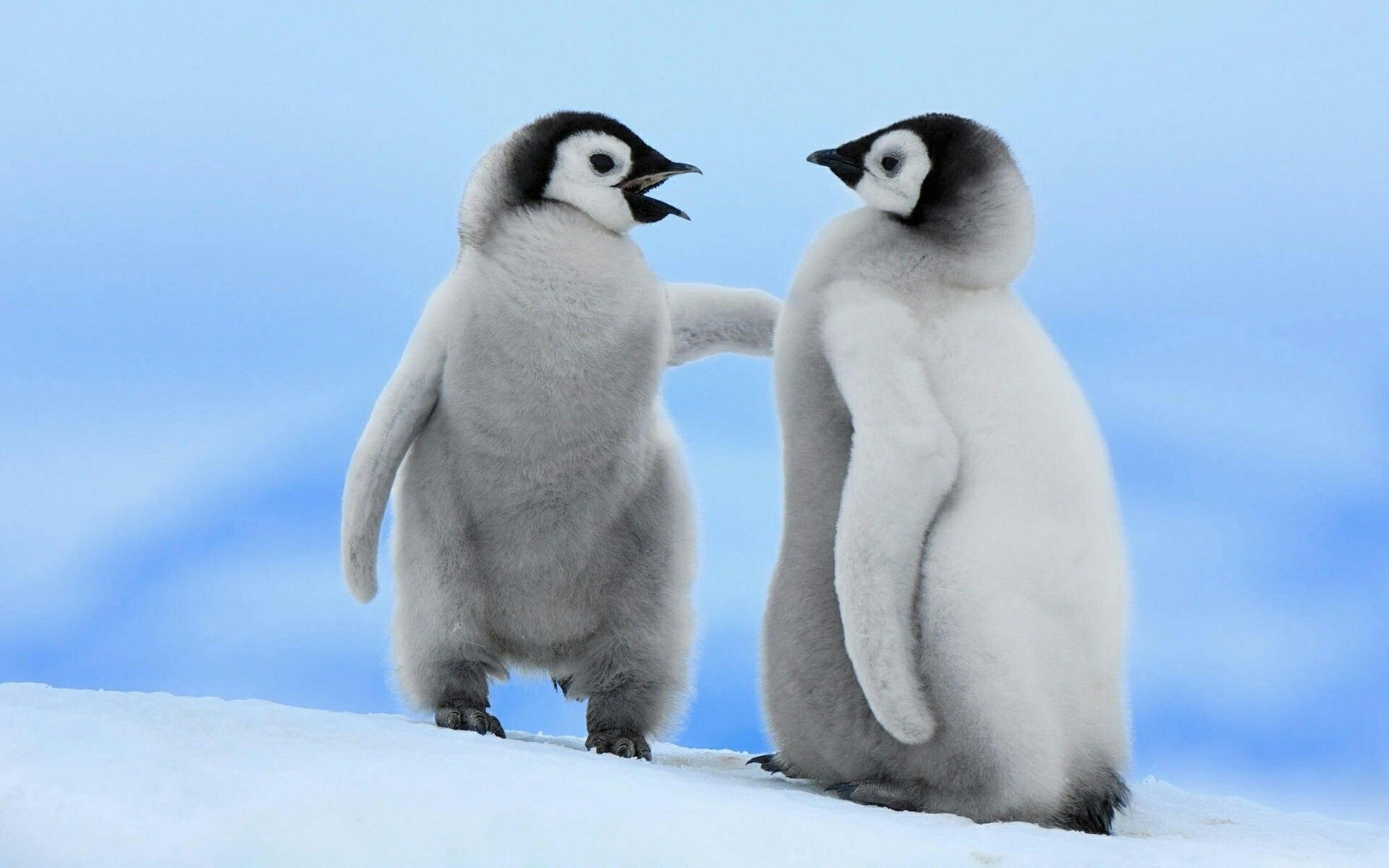 Pin By Binu Eapen On Aww Baby Animals Pictures Baby Animals Penguins