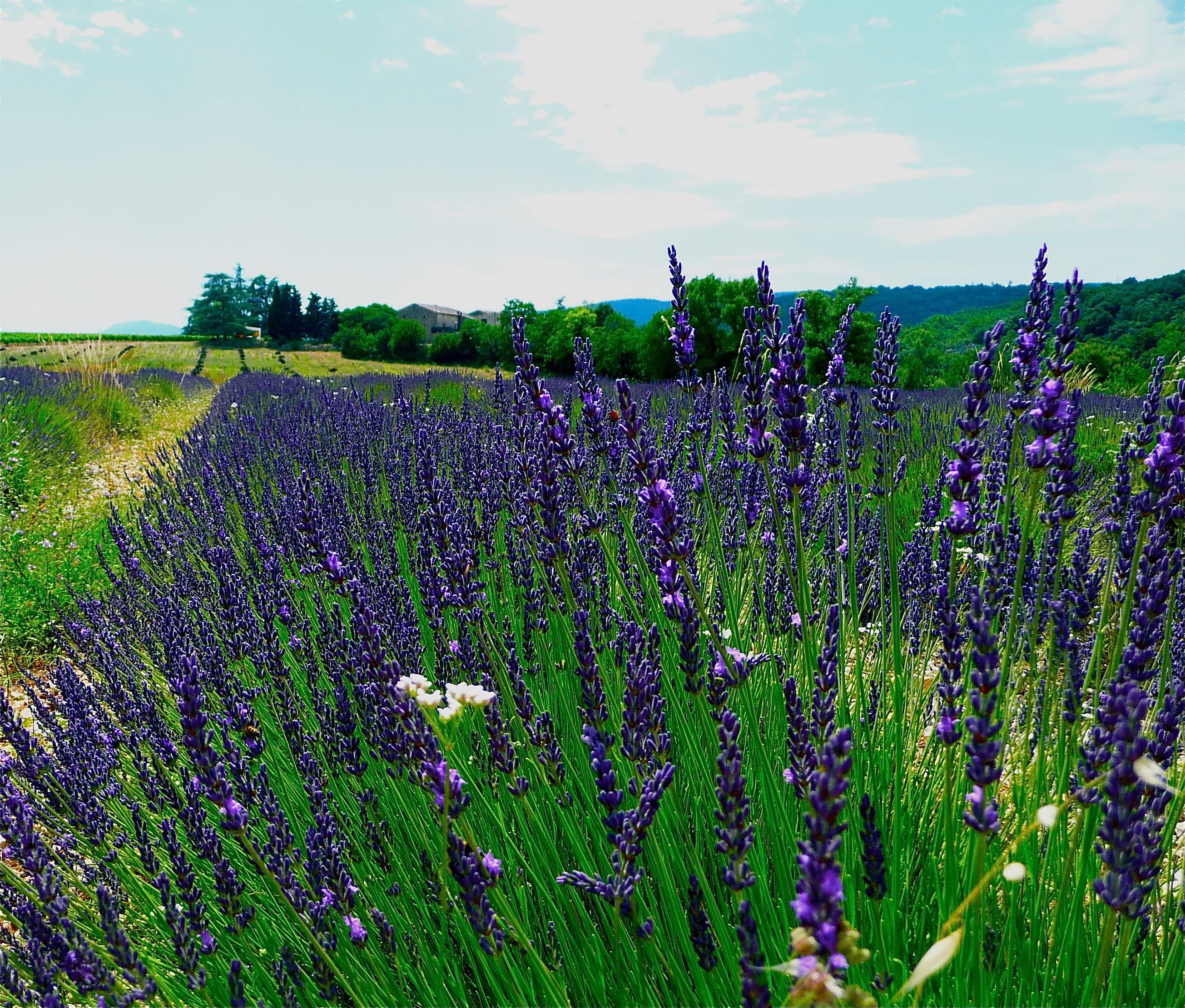 Natural Mothers Herbal Healing Salve Tutorial