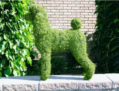 Looking For Edward Scissorhands With Images Dog Garden