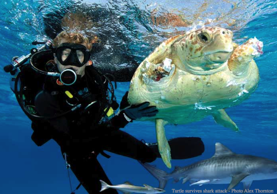 With a degree in Marine Biology you can find yourself working with ...