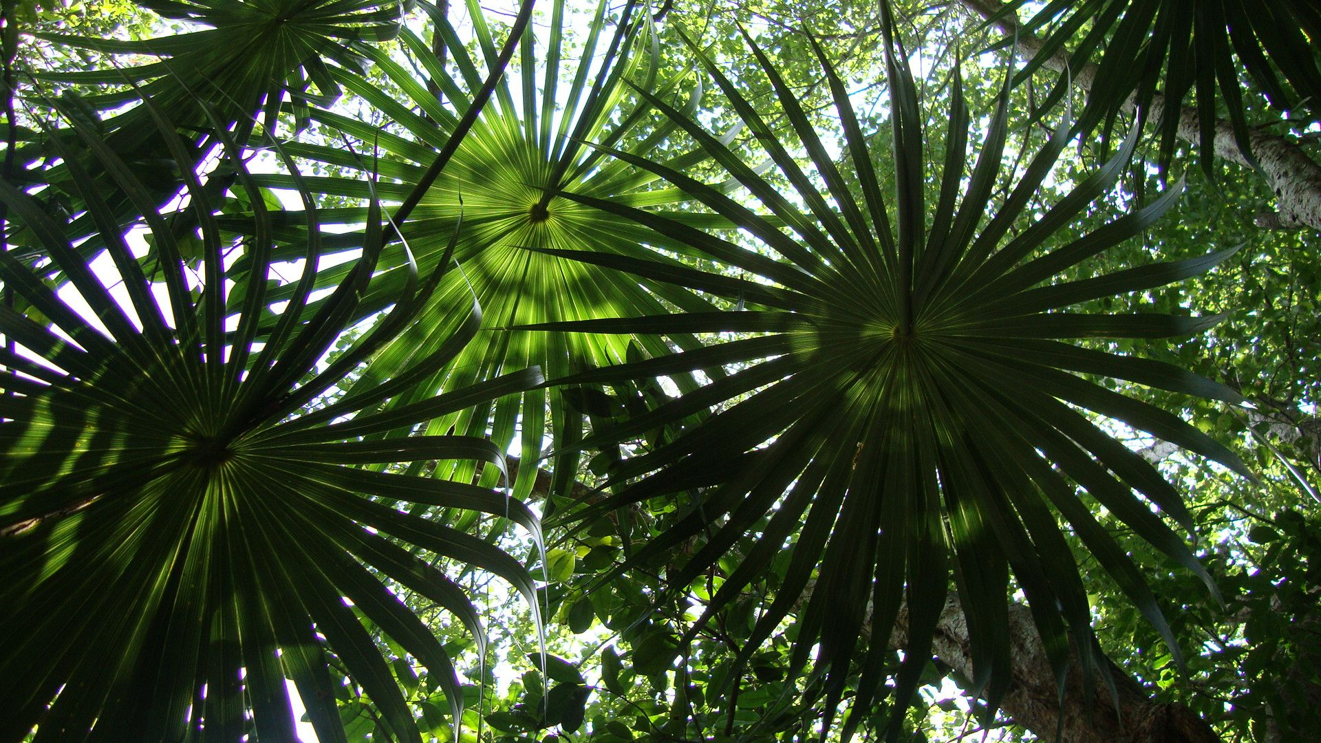 Jungle Canopy | Visual idea for  The Heights ? | Wildwood Forest VBS | Pinterest | Canopy Count and Filing & Jungle Canopy | Visual idea for