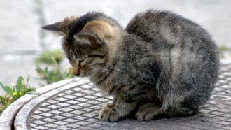 Comment loigner les chats avec un r pulsif astuces - Repulsif chat jardin naturel ...