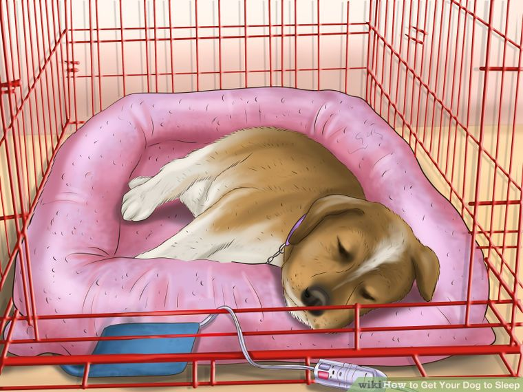 How to get your dog to sleep your dog good sleep dogs