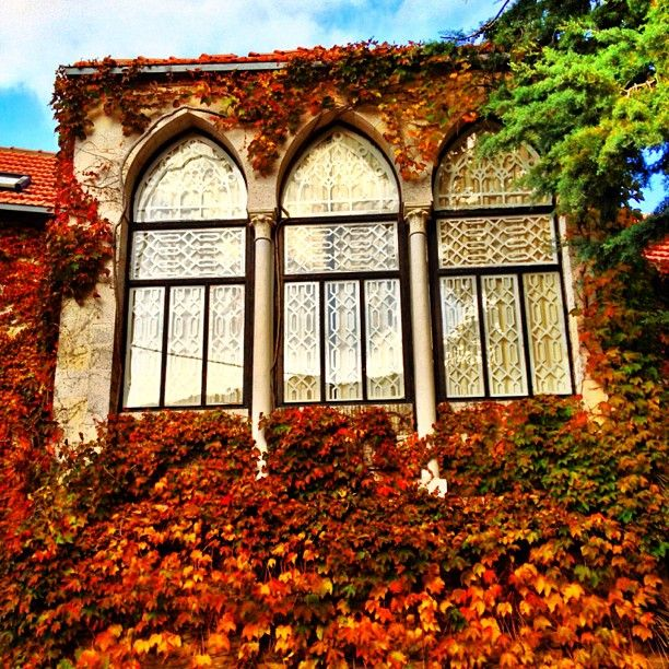 A Beirut home with beautiful windows Arabian decor