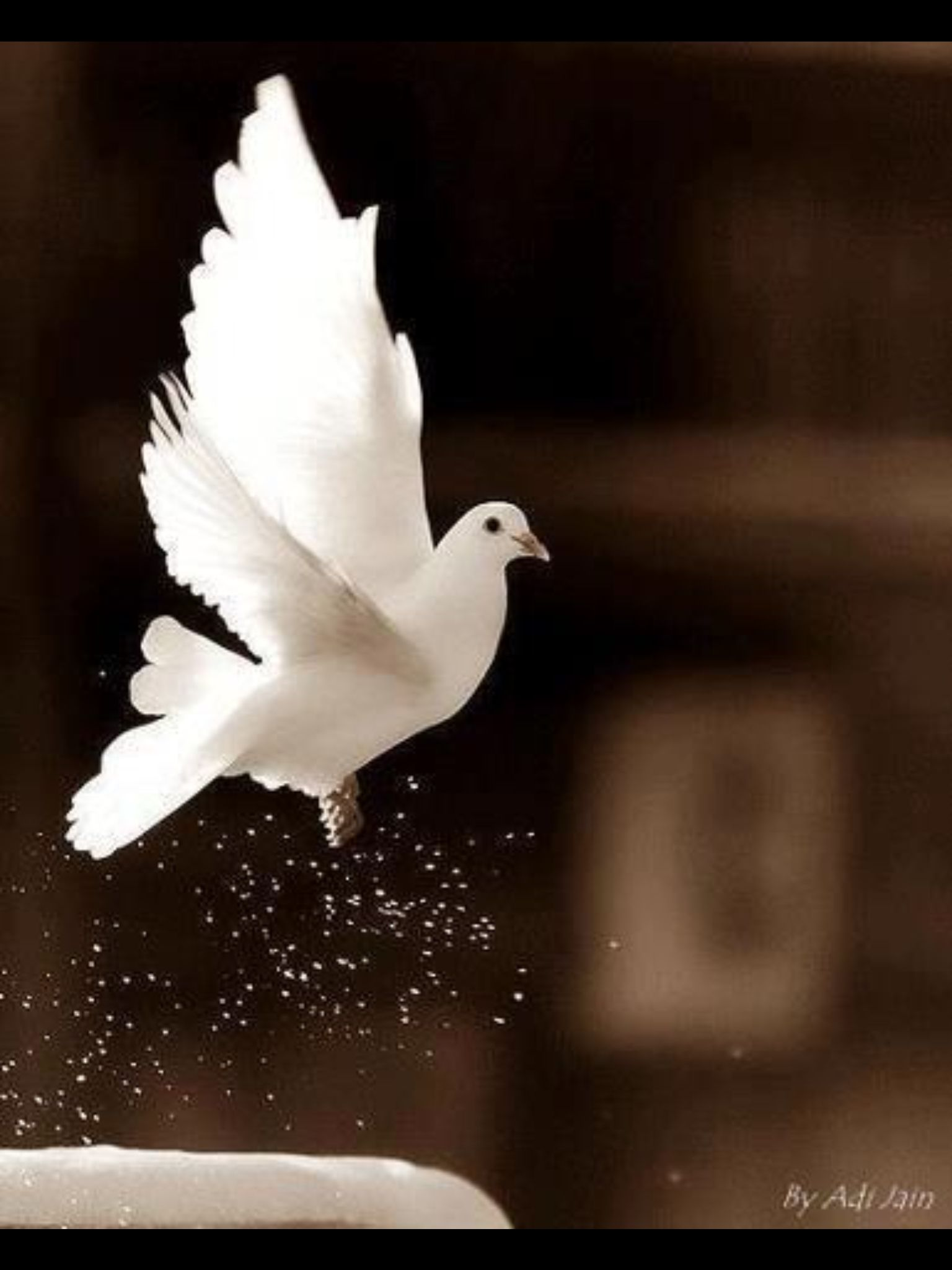 If You See A White Dove Its A Symbol Of Love And Peace