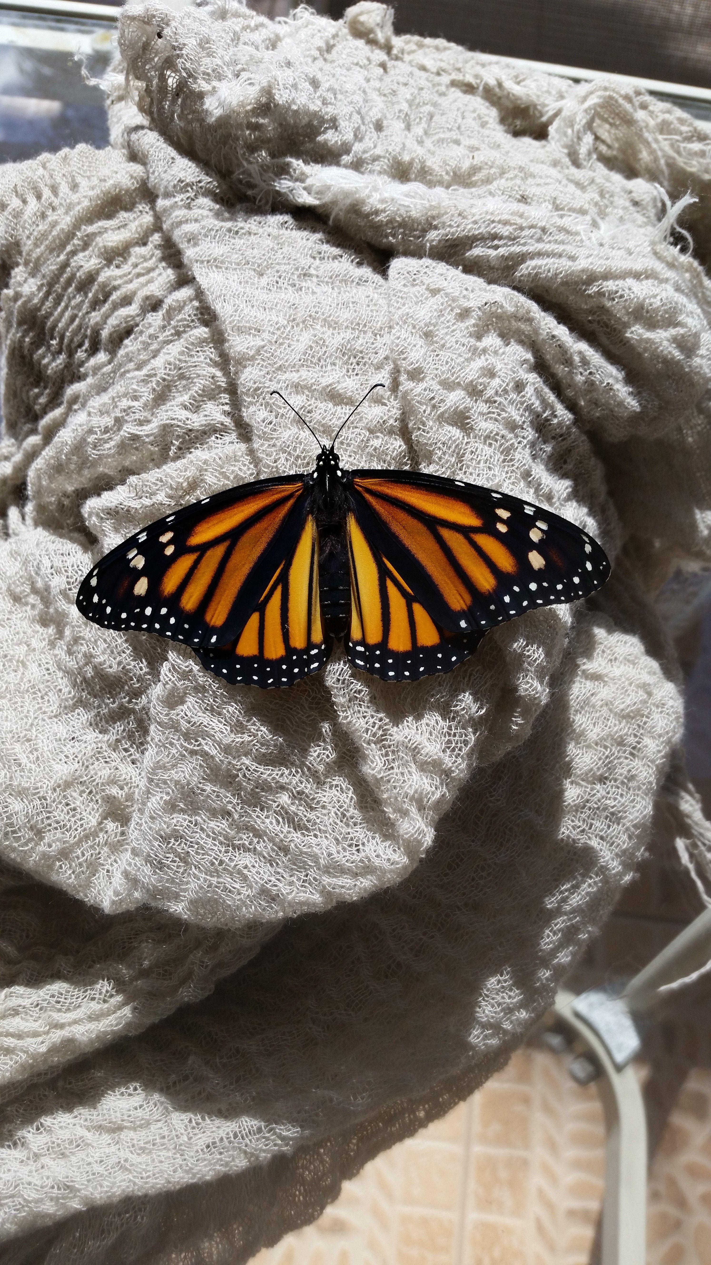 08feb18 Beautiful Butterfly Photography Butterfly Wallpaper Butterfly Art