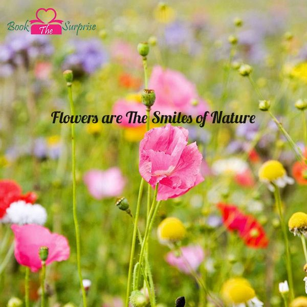 #Flowers are the smiles of #nature.#garden#giftidea #bookthesurprise