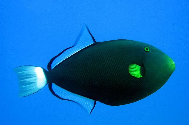 Trigger Happy Coral Reef Animals Cool Fish Image Of Fish