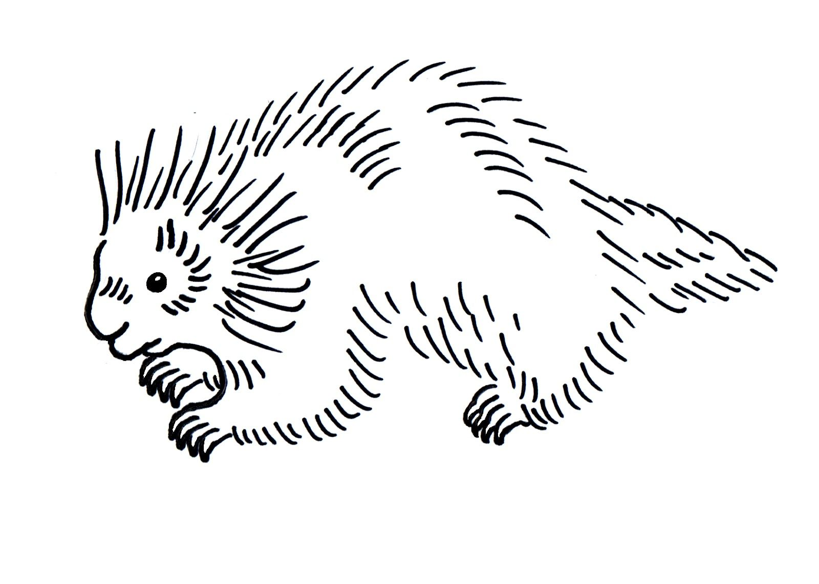 Porcupine Coloring Pages Best Coloring Pages For Kids Coloring Pages Coloring Pages For Kids Animal Coloring Pages
